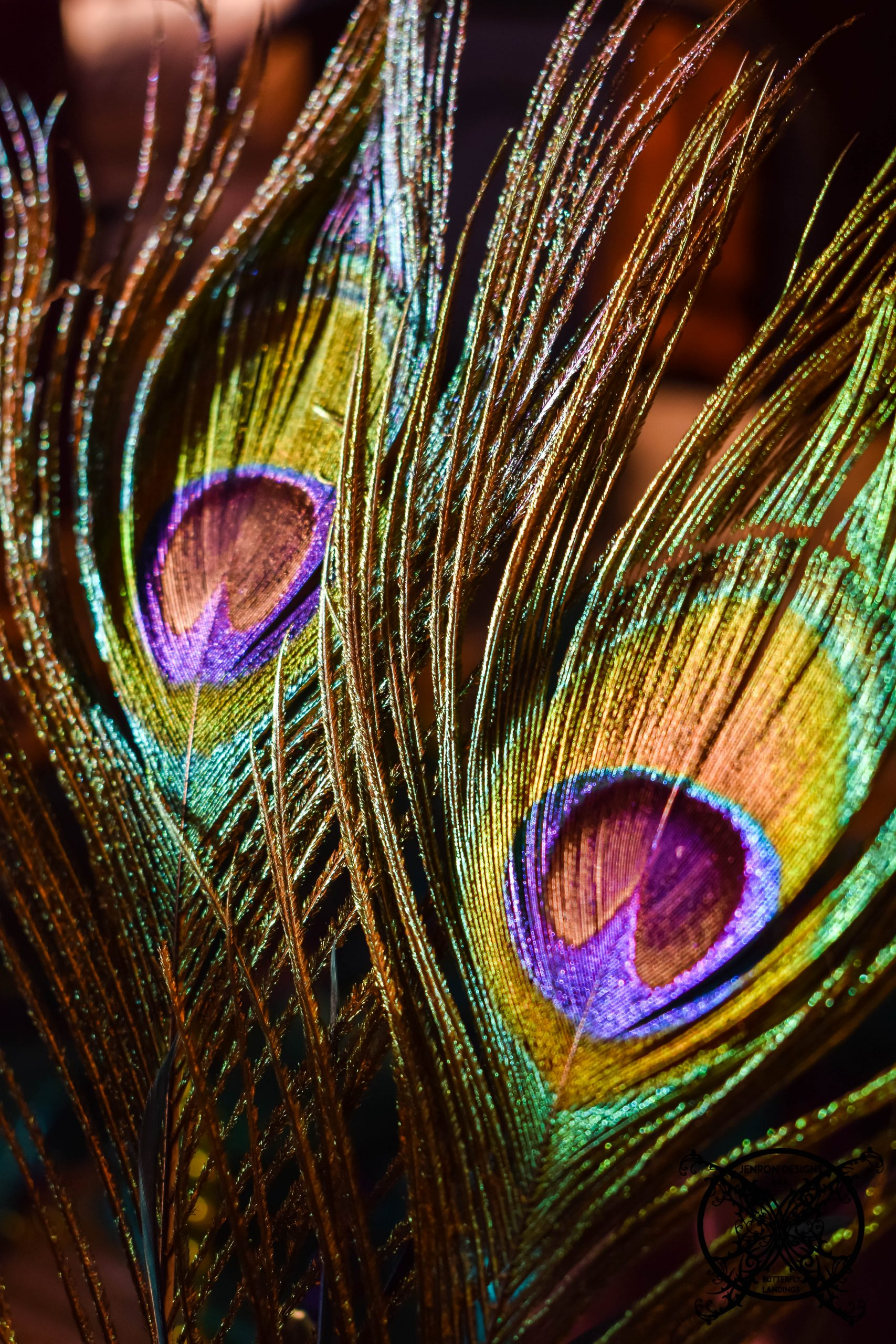 Peacock Feathers JENRON DESIGNS