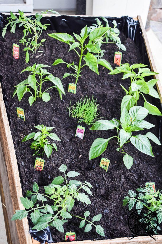 Wheelbarrow Garden diy Pin JENRON DESIGNS