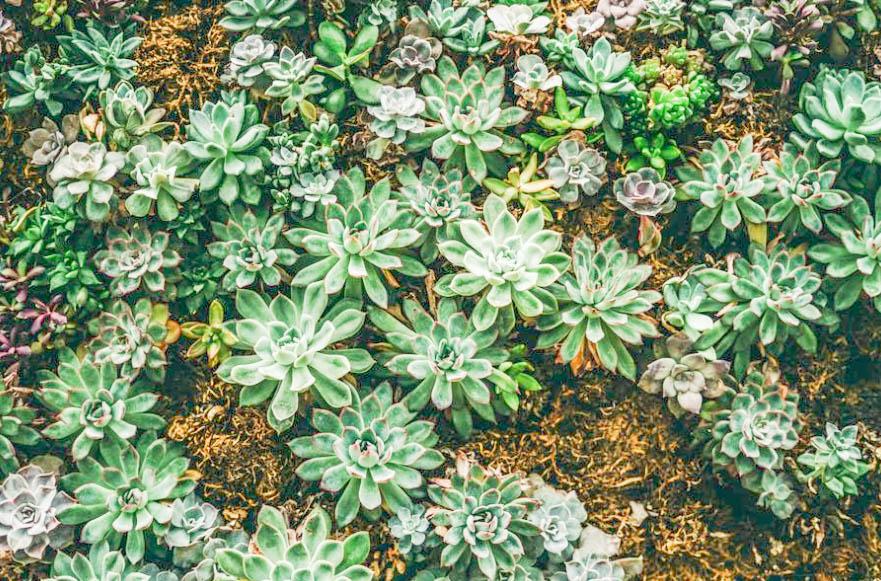 Aloe Succulents JENRON DESIGNS