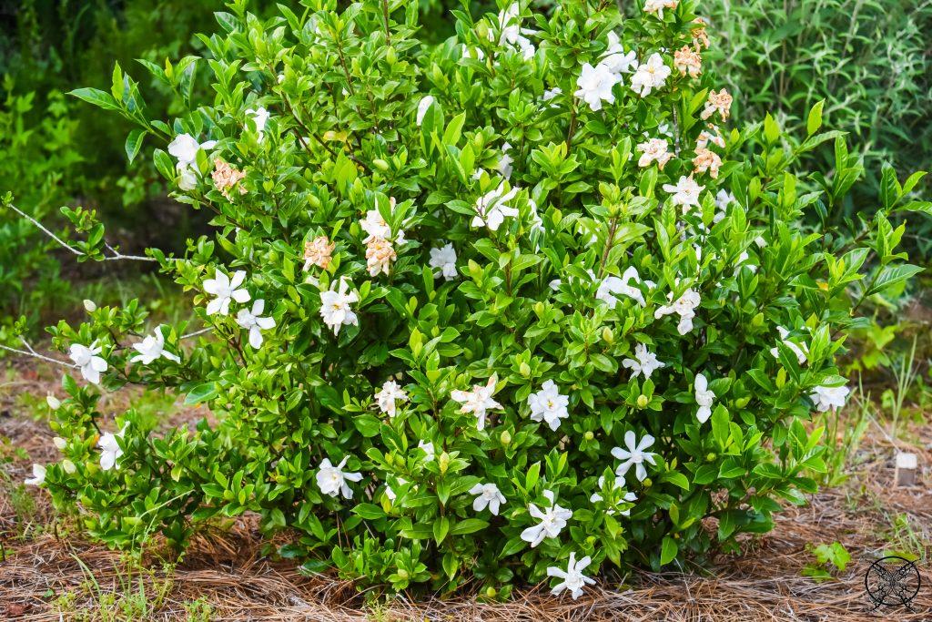 Gardenia Bush JENRON DESIGNS