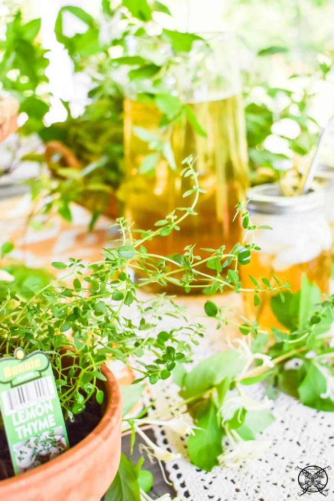 Add Lemon Thyme to Honeysuckle Sweet Tea JENRON DESIGNS