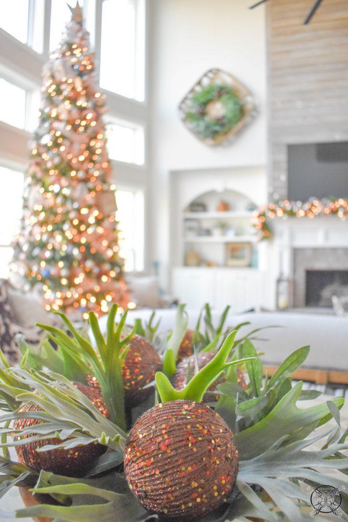 Holiday Staghorn Ferns JENRON DESIGNS