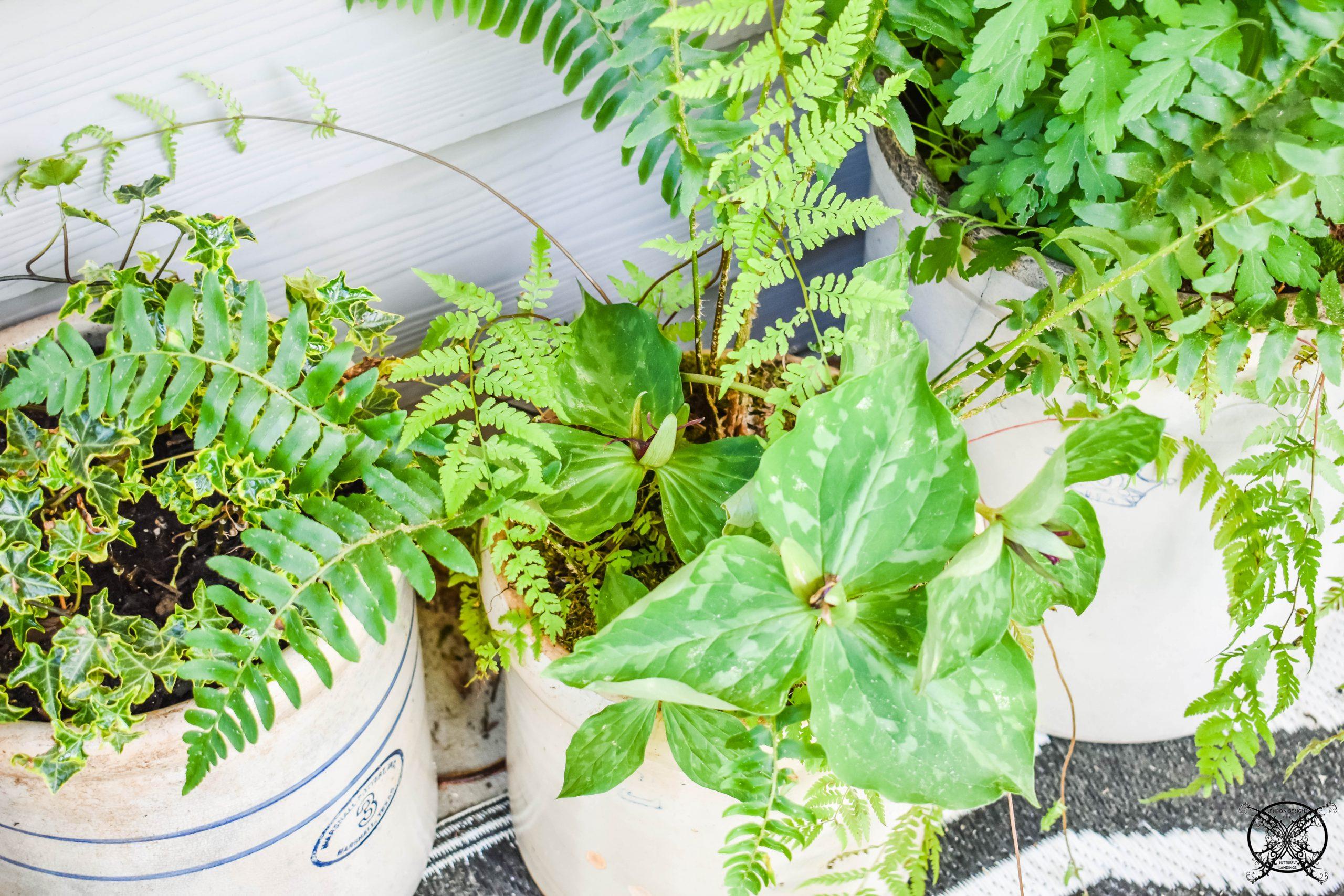 A Fern Garden JENRON DESIGNS