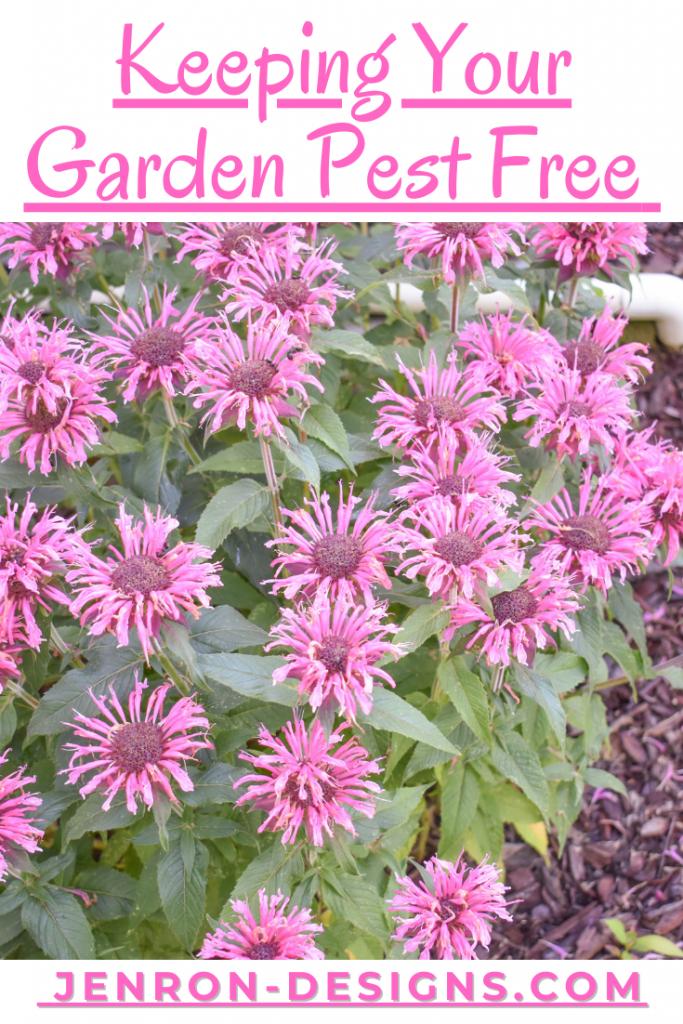 Keeping Garden Pest Free JENRON DESIGNS