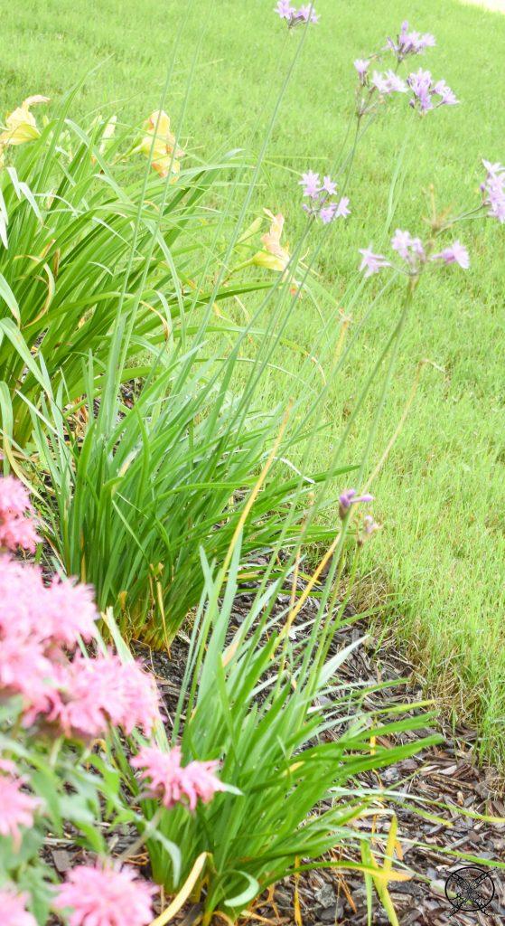 Natural Plants as Deterrents JENRON DESIGNS