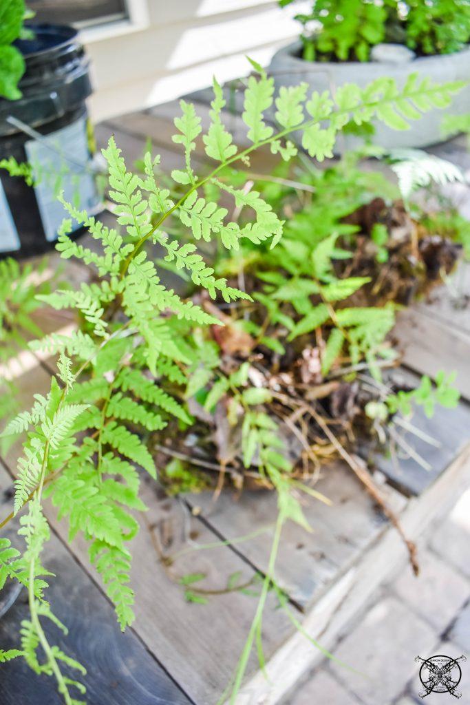 Replanting the Ferns JENRON DESIGNS