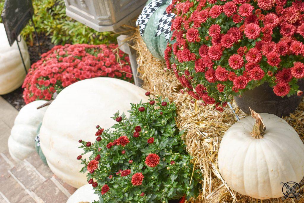 White Red & Green Pumpkins Go DAwgs JENRON DESIGNS