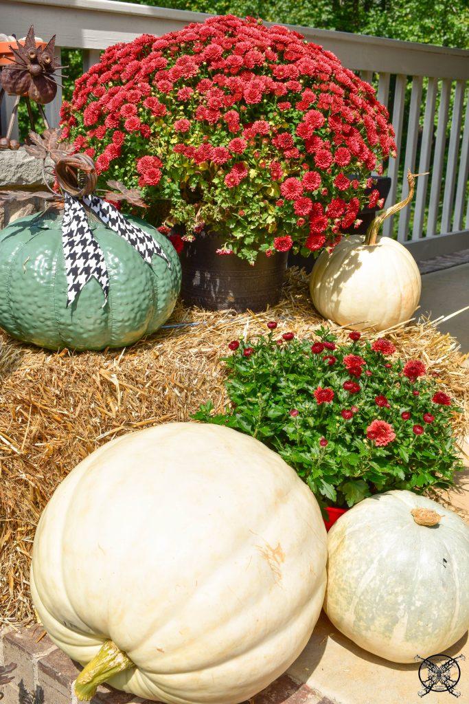 White Red & Green Pumpkins JENRON DESIGNS